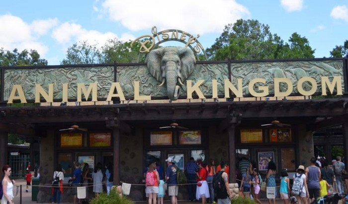 Disney's Safari  Park at Animal Kingdom Orlando Florida-2017