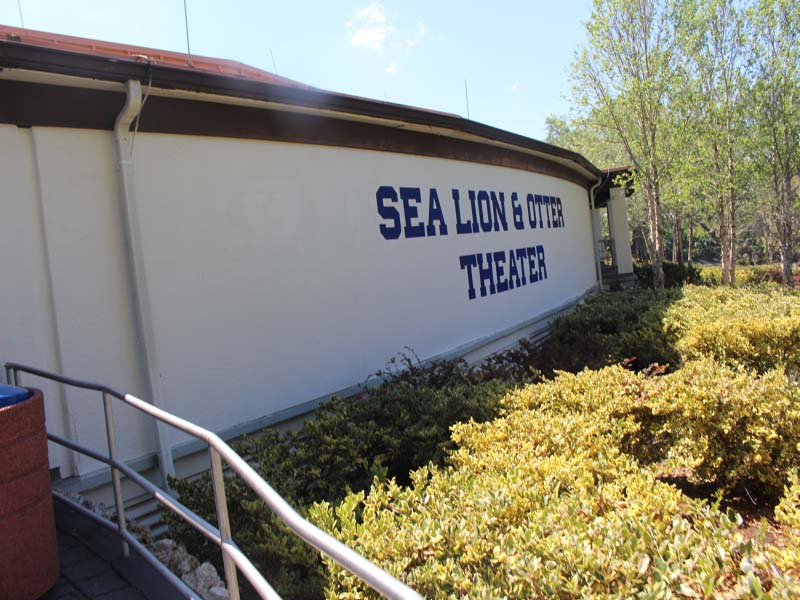 Sea lion Shows at Seaworld