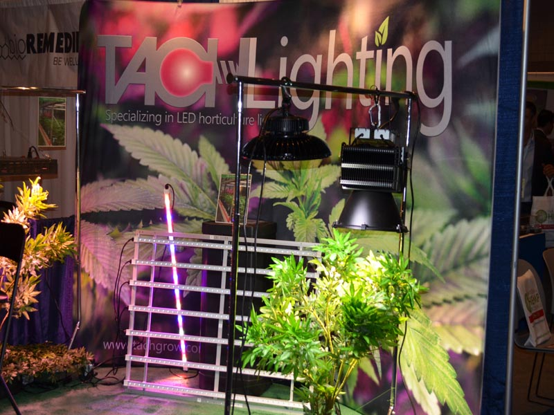 LED Lights Ffor Growing Cannabis